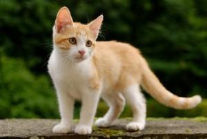 best kitty litter