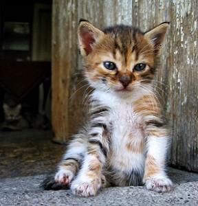 kitten using litter