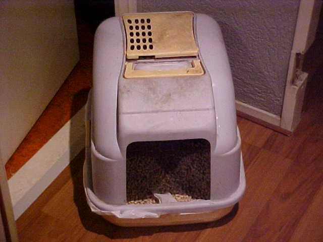 Reasons Your Cat Isn T Using Its Litter Box Cat Litter Help