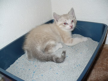 My Cat Had Kittens In The Litter Box