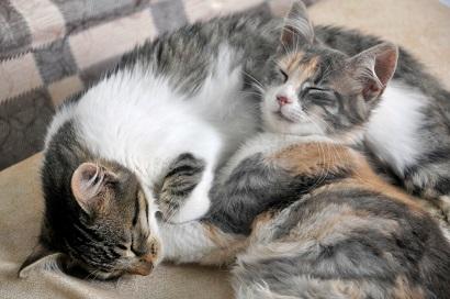 multiple cats litter box