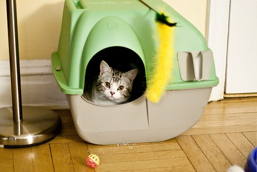Image result for best litter box for multiple cats