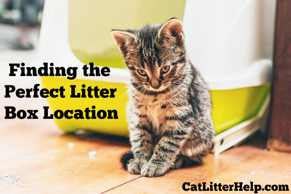 finding the perfect litter box location