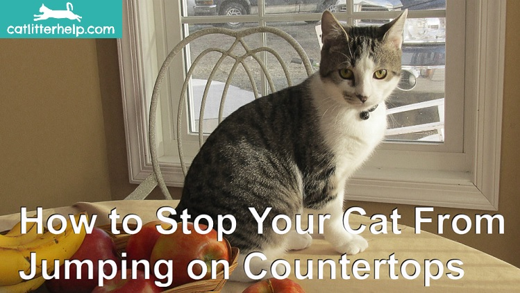 how to stop your cat from jumping on countertops