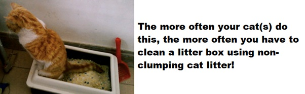 multi cat litter usage