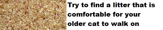 older cat litter comfortable to walk on
